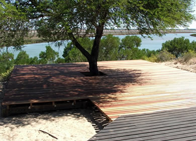 wrap-around tree wooden decking